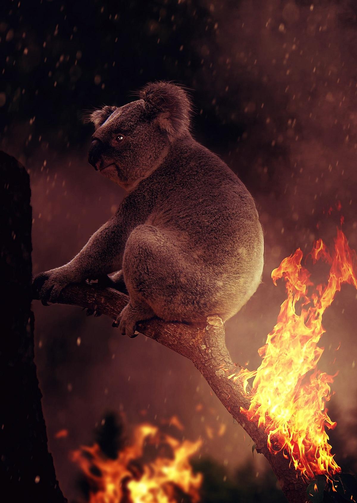 Australien – der Spielplatz der grausamen Natur.